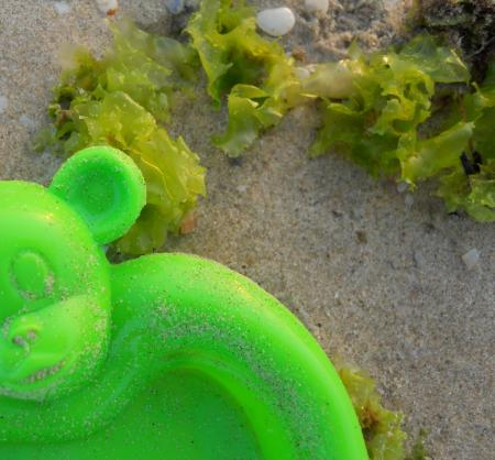 סימביוזה של אצה ודובי ירוק