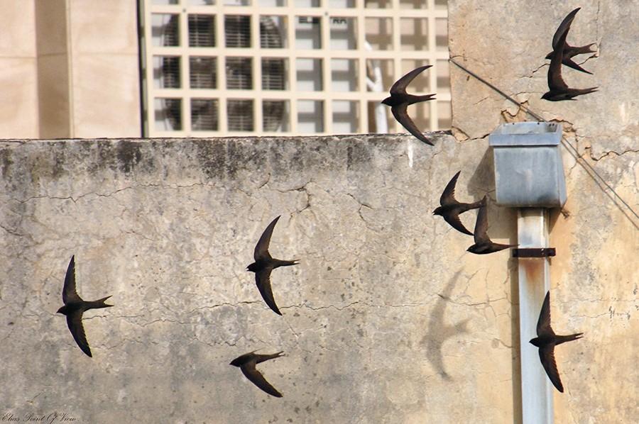 סיסים בתל אביב צילם אלי אליאס