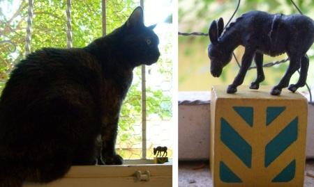 חתולה וחמור