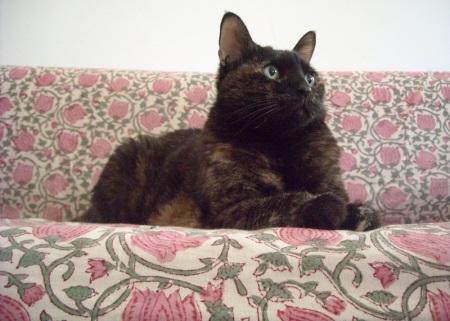 חתולת הלוטוס