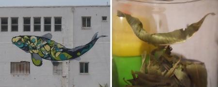 דג בנמל יפו + ציפור עלה