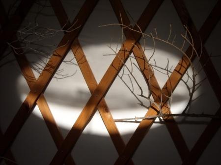 עץ ואור
